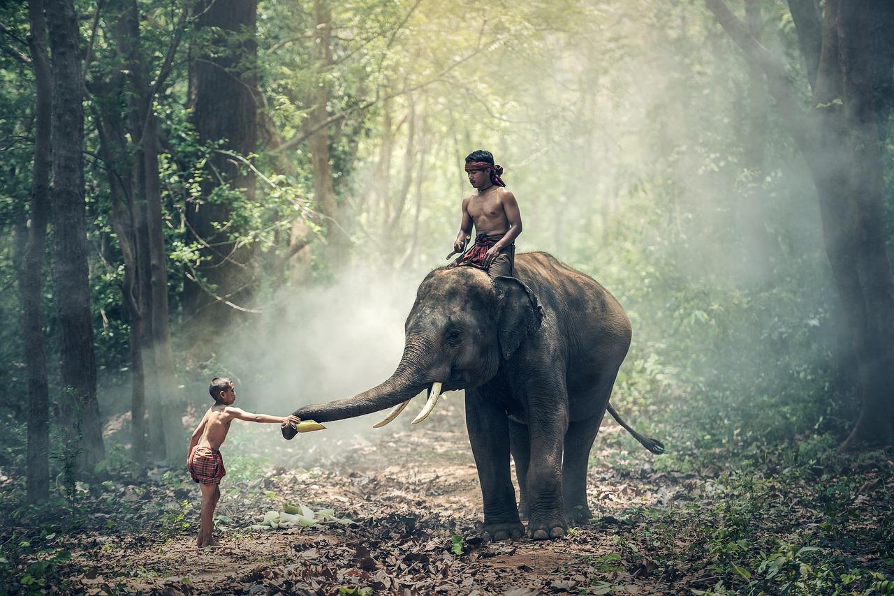 שני ילדים ופיל - הודו