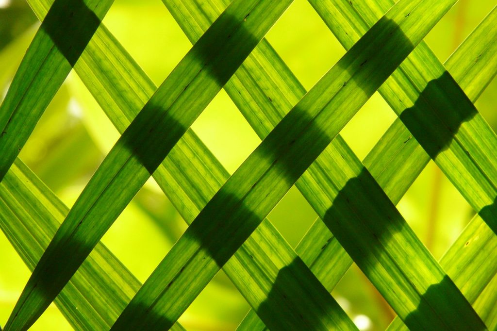 טפט ירוק לבית